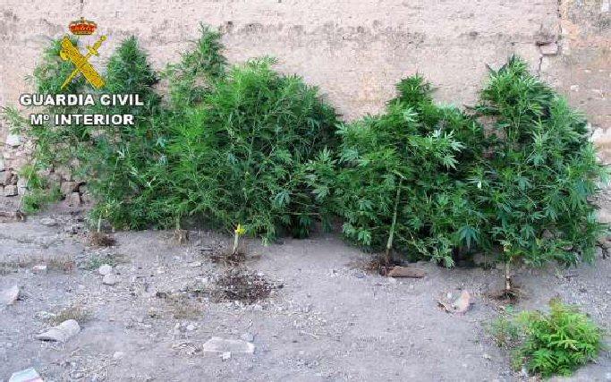 La Guardia Civil detiene seis personas en Aldea del Rey, Manzanares y Villarrubia de los Ojos por cultivo de marihuana