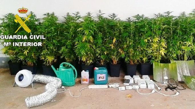 Pozuelo de Calatrava Cuatro detenidos y un imputado por robos en casas y cultivo de droga