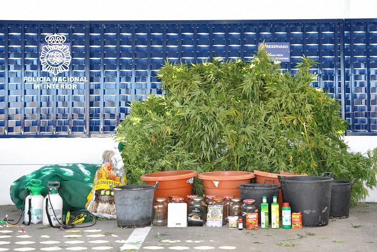 carrion-de-calatrava-desmantelado-un-cultivo-de-marihuana-en-la-terraza-de-una-vivienda-unifamiliar