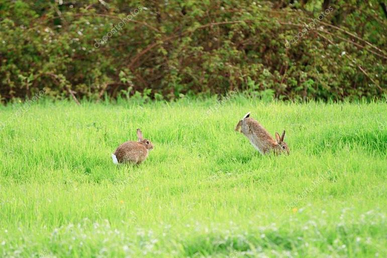 231 municipios de Castilla-La Mancha declarados en emergencia cinegética por la plaga de conejos