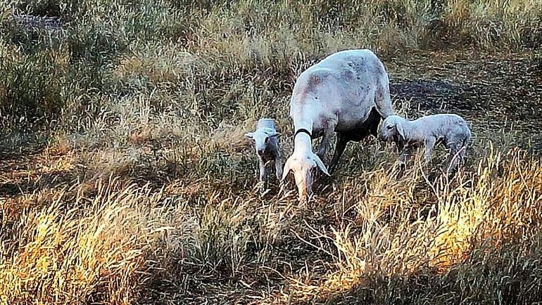 Castilla La Mancha completa el pago de la PAC a los agricultores y ganaderos de la región